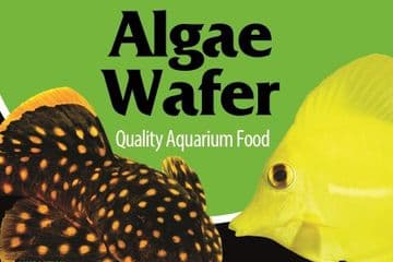 Algae Wafer