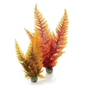 Oase Biorb Aquatic Autumn Fern