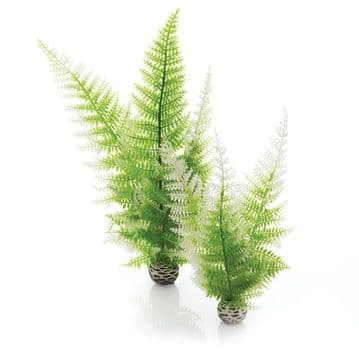 Oase Biorb Aquatic Winter Fern